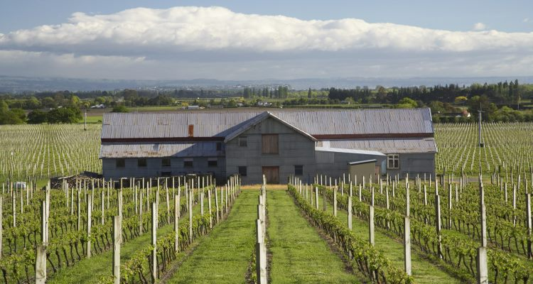 Te Mata Estate Vineyard