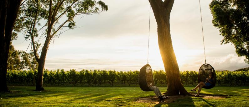 Marlborough Vineyard swings