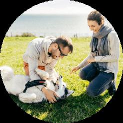 AA Pet Insurance   AA New Zealand
